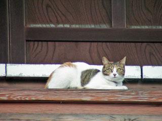 延台寺本堂で雨宿りする猫