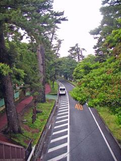 大磯の松並木