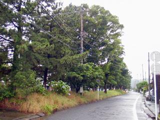 並木の向こうは国道1号