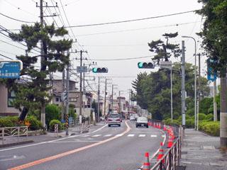 二宮駅付近の松の木
