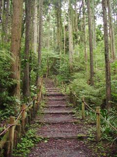 杉林の中を行く