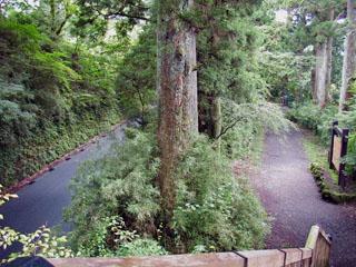 杉並木歩道橋から車道と遊歩道を見下ろす
