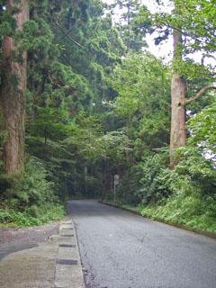 杉並木。ここが湯坂道との合流点。