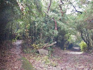 笹藪の中に入る道