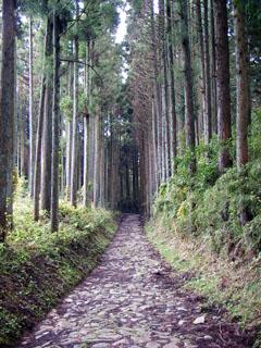 小枯木坂の石畳と杉並木