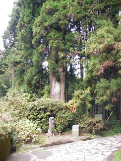 杉の大木の前に雲助徳利の墓