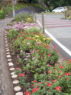 遊歩道脇の花壇