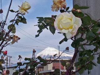 バラと富士山